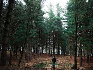 Ohranjanje narave