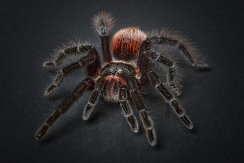 V mreži kolektivnega energijskega pajka